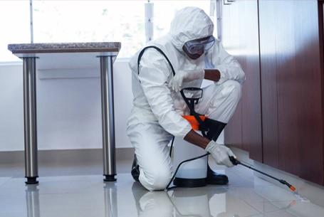 B2B Pest Control Services Sydney