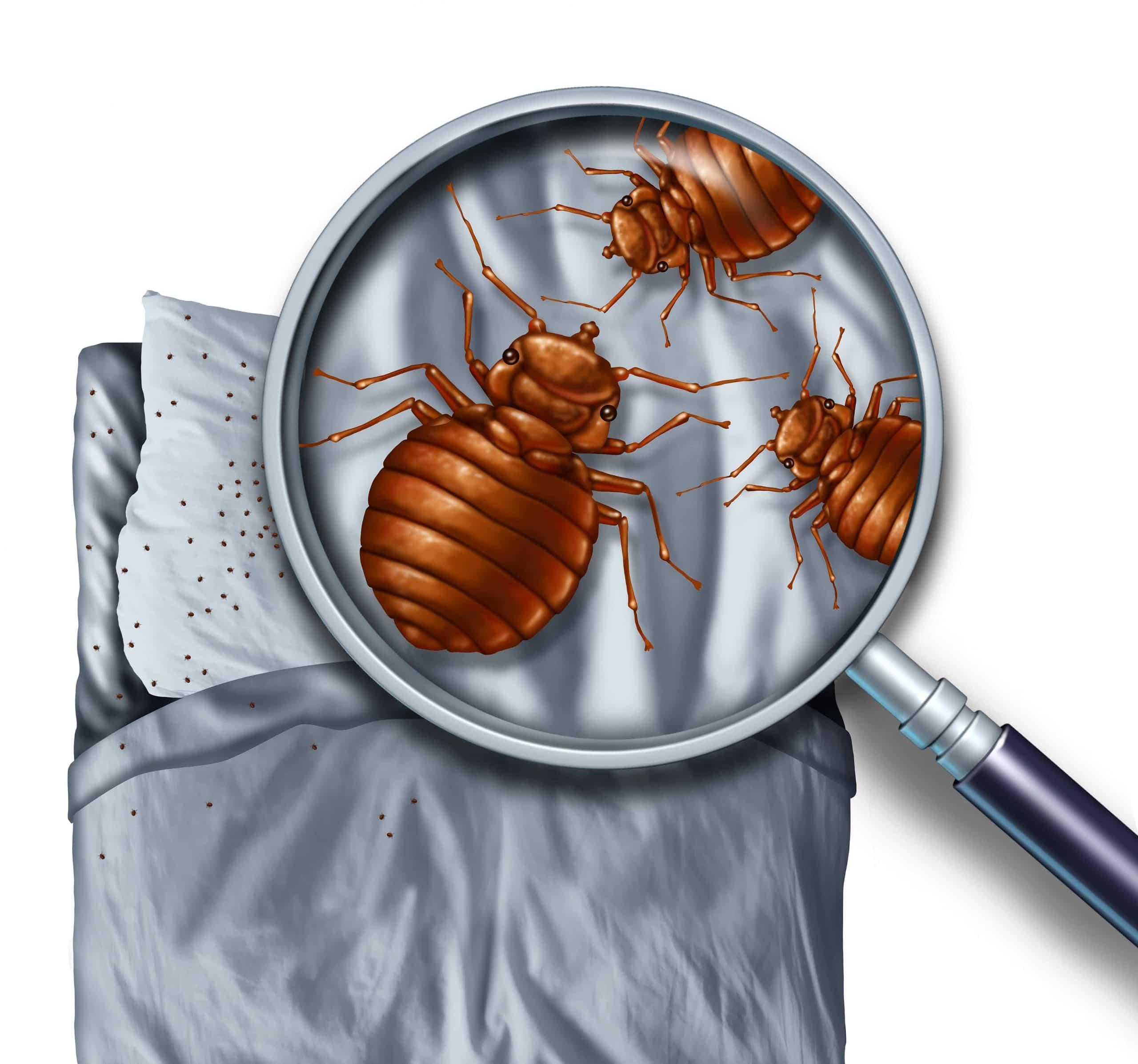 bed_bug_control_sydney