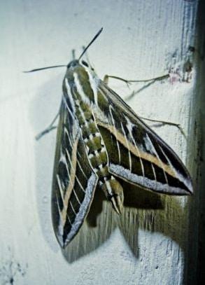 Pantry Moths control Sydney