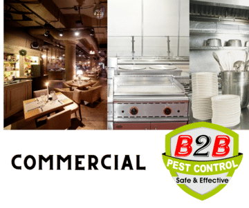 Commercial_Pest_Control Service