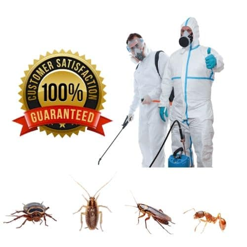 cockroaches Control Service Lakemba