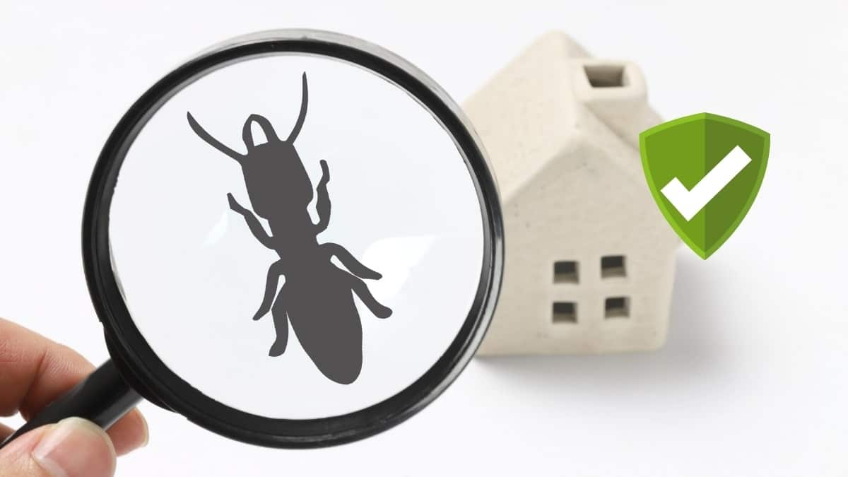 Pest Control Service in Punchbowl