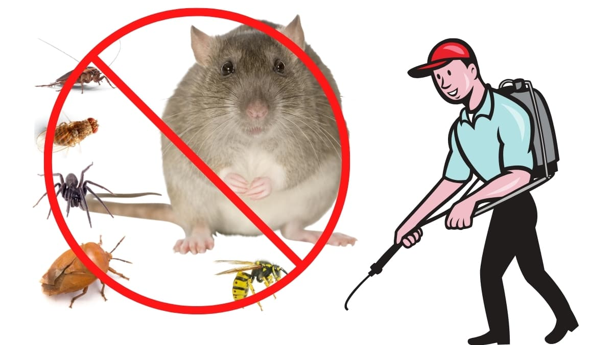 Pest control Service in Greenacre