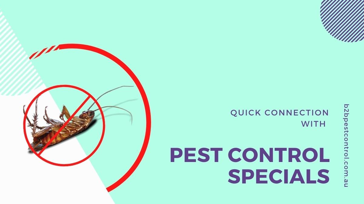 pest-control-belmore