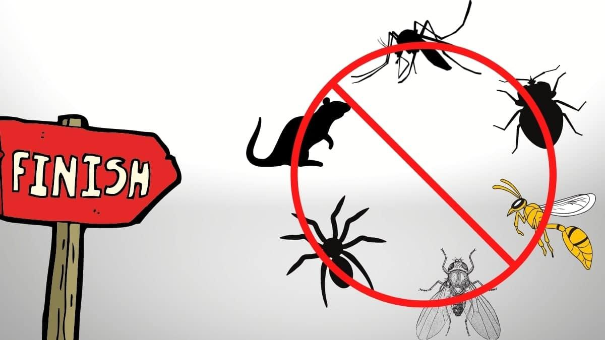 pest control service in ashfield