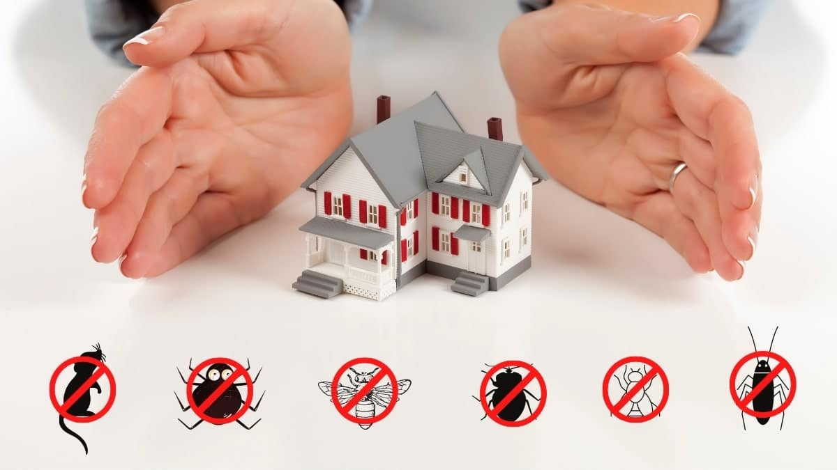 pest control service in padstow