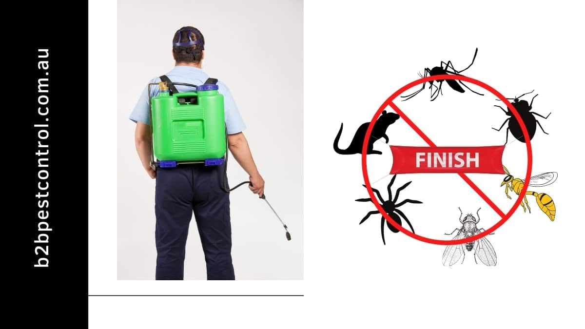 pest control service in roselands