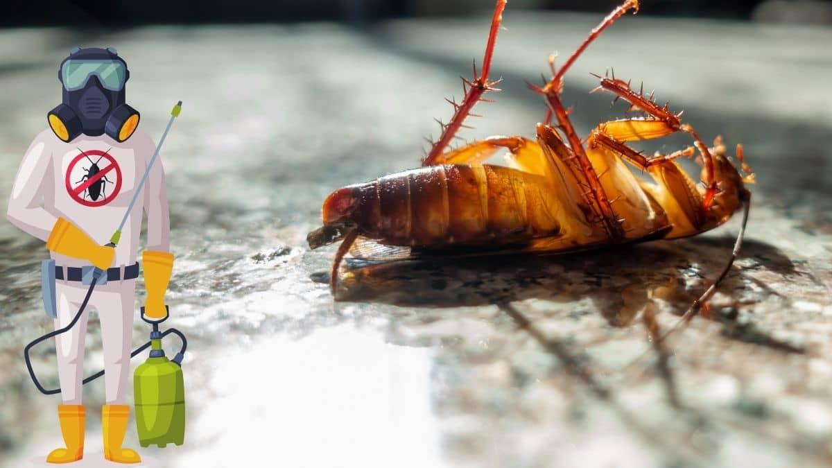 Pest Control In Oran Park