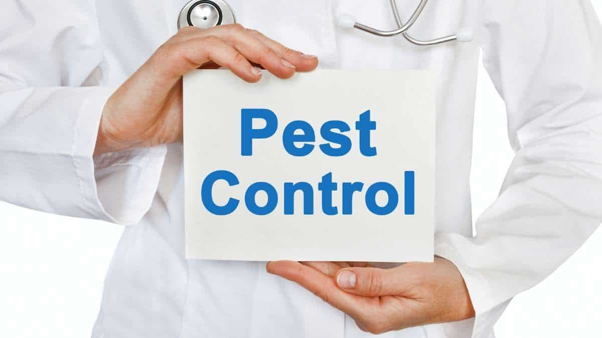 Pest Control Service in Campbell Town