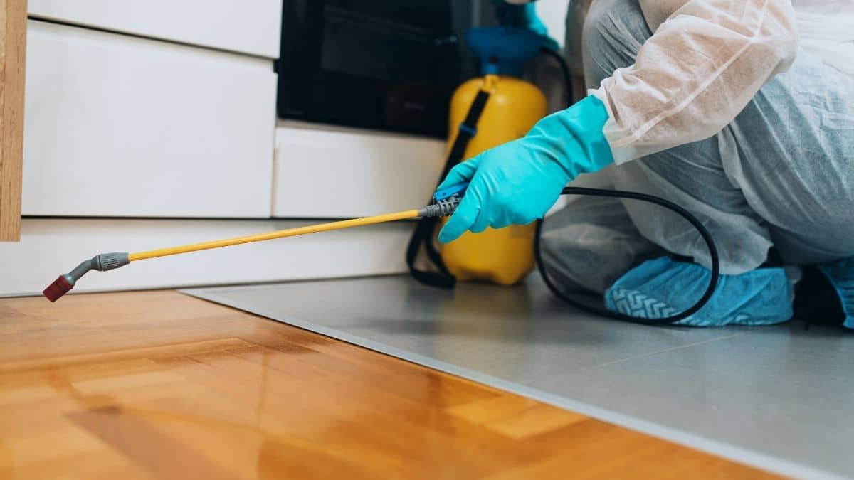 Pest Control Service In Canley Heights
