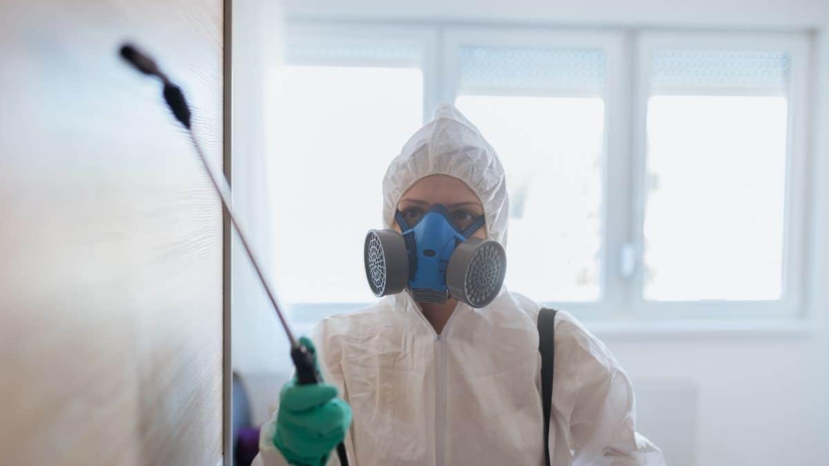 Pest Control Service in Casula
