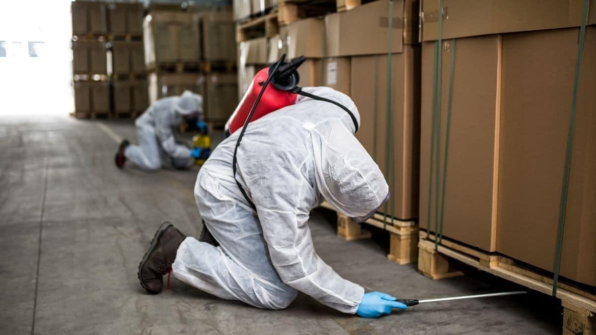 Pest Control Service In Leppington
