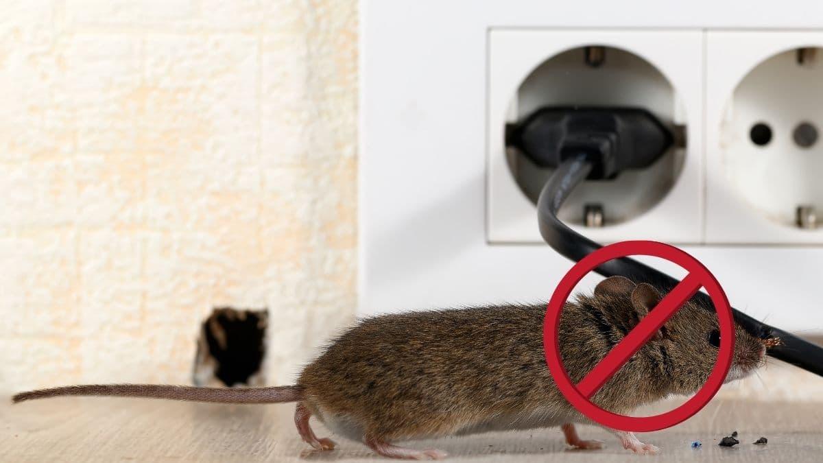 Pest Control Service in Prestons